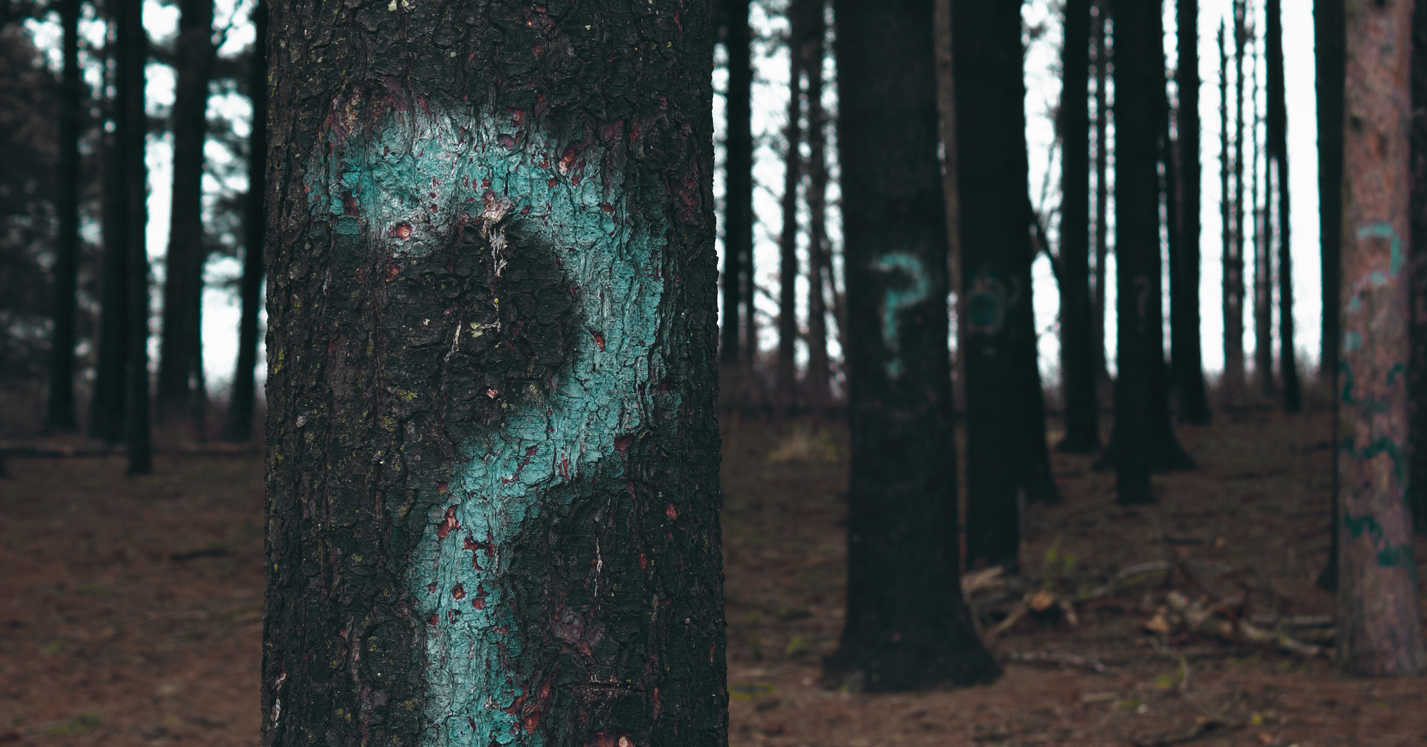 a copse of trees with question marks painted on them